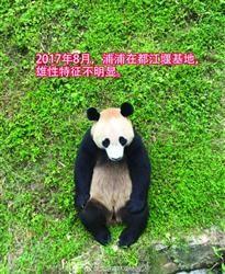熊猫浦浦:我有个秘密要和大家分享